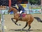 """Das erste Wochenende der """"44. Pferdesporttage Montafon Schruns-Tschagguns"""" geht am 8. August zu Ende. Weiter geht´s am 13. August."""