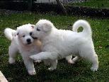 Hundesportverein bietet einen Kurs Hunde besser verstehen im September an.