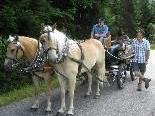 Stolze Pferdebesitzer mit ihrem Gespann