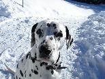 Hunde sollen laut Fritz Degenkolb vor dem Schulgebäude oder Kindergarten bleiben.