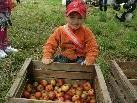 Gerne helfen die Kinder bei der Apfelernte für den Kindergarten - Süßmost