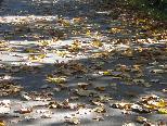 So darf es weitgehn mit dem Herbst