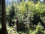 Über 380.000 Festmeter Holz befinden sich auf den städtischen Waldgrundstücken.