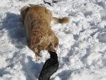 Asy und Gina tollen im Schnee