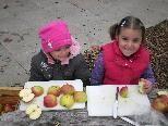 """Der Obst- und Gartenbauverein lädt die Bludescher Kids morgen zum """"Tag des Apfels"""" ein"""