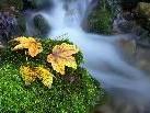 Herbstimpressionen aus dem Bregenzerwald