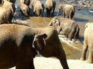 40.000 Hektar für wilde Elefanten & Co.