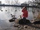 Groß und Klein genossen das milde Winterwetter am Alten Rhein