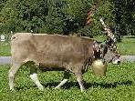 Mit Original Braunvieh eine Talschaft stärken