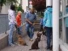 Um den Hunden Sicherheit zu geben, finden die Welpenkurse an verschiedenen Orten statt.