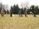 Beim Hundesportverein wird bei jedem Wetter trainiert.