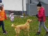 Auch Jugendliche sollen ihren Hund erziehen