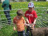 Ein besonderer Anziehungspunkt für Kinder - die Ziegenausstellung
