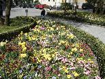 Eines der zahlreichen von der Stadtgärtnerei wunderschön gestalteten Frühlingsbeete beim Leonhardsplatz.