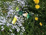 Flurreinigung Doren - Die Natur soll am kommenden Samstag von allerlei Müll entsorgt werden.