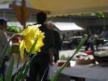 Frühling beim Göfner Dorfmarkt