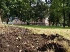 Maikäferplage- Die Stadt Bludenz animiert zur Sammelaktion.