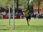 Rankweil-Goalie Thomas Kober mit einer Glanzparade, aber einmal war auch er machtlos.