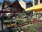 Rechtzeitig zur warmen Jahreszeit findet in Dornbirn wieder der alljährliche Blumenmarkt statt.