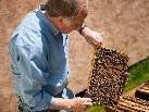 Beim Umgang mit den Honigbienen muss man vorsichtig sein, um nicht gestochen zu werden.