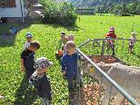 Bingser Zwergle erkundeten den Bauernhof der Familie Küng