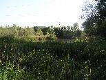 Biotop Lehmgrube, nördlich der ARA Meiningen