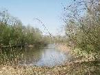 Die Wanderung führt durch die Auenlandschaft am Alten Rhein.