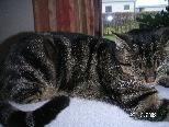 Unsere Katze Maxi