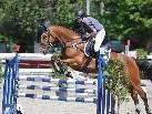 Von 11. bis 13. Juni präsentiert sich am Bregenzer Reitgelände Pferdesport mit Kraft und Grazie