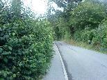 Heckenwildwuchs gefährdet Fußgänger(innen)