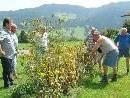 Für ein gutes Wachstum im nächsten Jahr wurden Obstbäume und Sträucher in Bildstein zurückgeschnitten