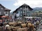Mensch und Vieh auf dem Dorfplatz in Alberschwende