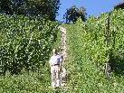 Nicht nur Vizebürgermeister Burkhard Nesensohn freut sich über die erneuerte, wunderbare Weinbergtreppe mit Natursteinen aus der Umgebung.