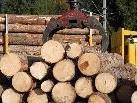 Wegen Holzschlägerungsarbeiten wird es am  27. September 2011 auf einem Teilbereich des Zabaresweges in Schruns ein Fahrverbot geben.