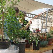 Wenn der Herbst kommt, sollten Mittelmeerpflanzen in professionelle Gärtner-Hände!