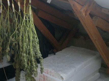 Polizei findet 1.000 Gramm Cannabiskraut