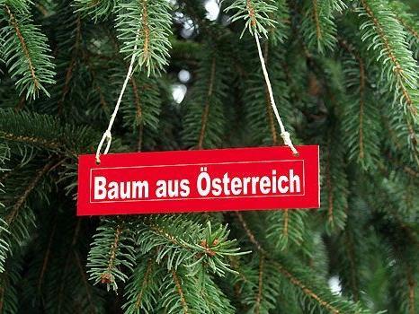 Das Burgenland spendiert den Wienern einen Christbaum