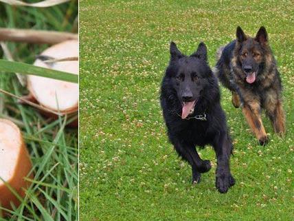 Zwei Hunde in Wien vergiftet