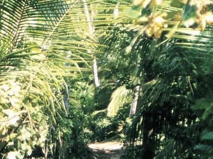 Villacher wurde angeblich im Dschungel festgehalten
