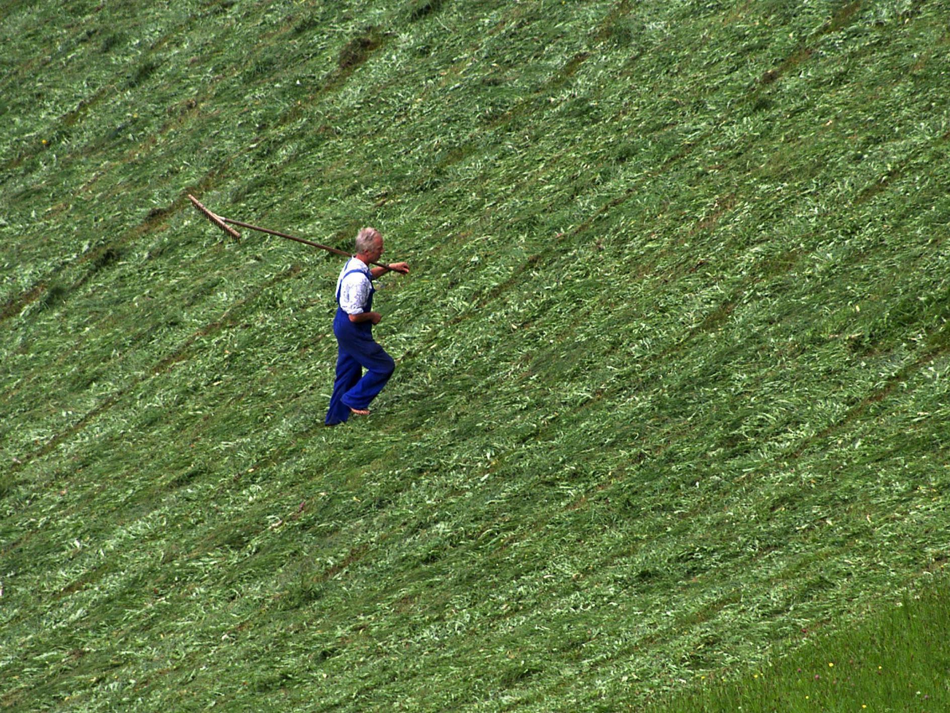 Agrargemeinschaften in Tirol gründen Verband