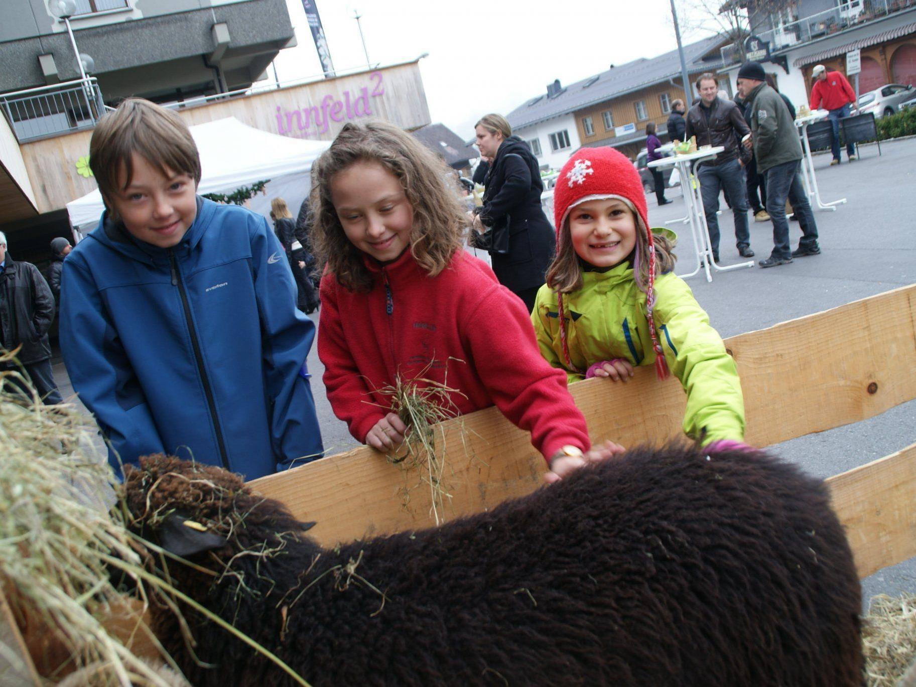 Viele Streicheleinheiten für die Adventmarkt-Schaffamilie