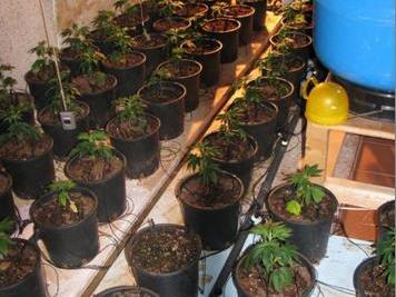 Wohlsortiert, belüftet und gut beleuchtet: So sieht eine professionelle Hanfplantage aus.