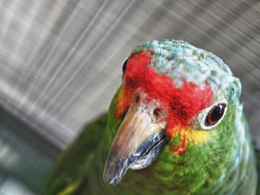 Die Papageien sind nur 'Untermieter' im Tierschutzhaus und werden von der AG Papageienschutz betreut.
