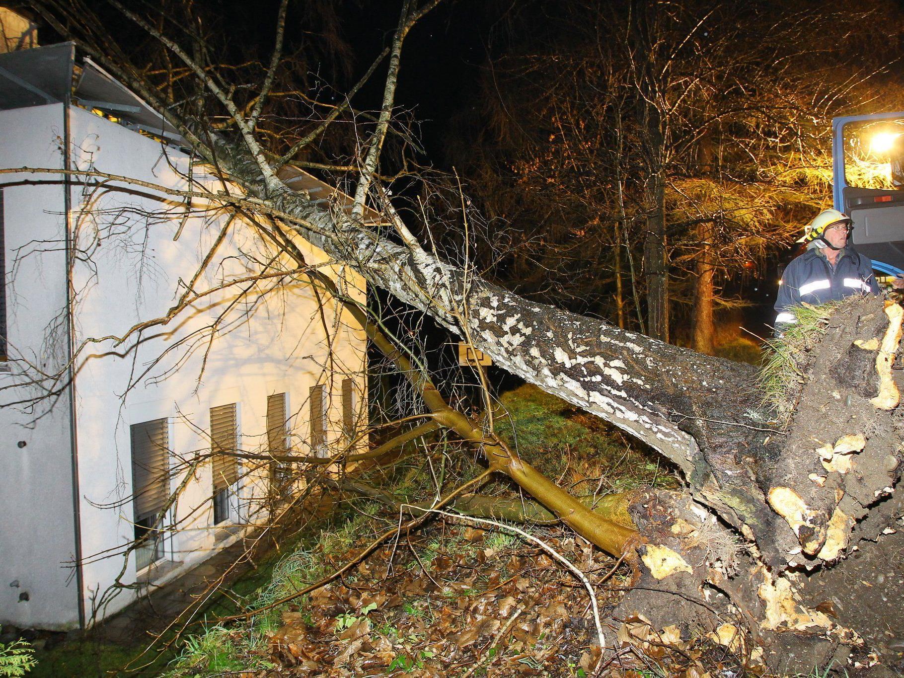 Der umgestürzte Baum richtete großen Sachschaden an.