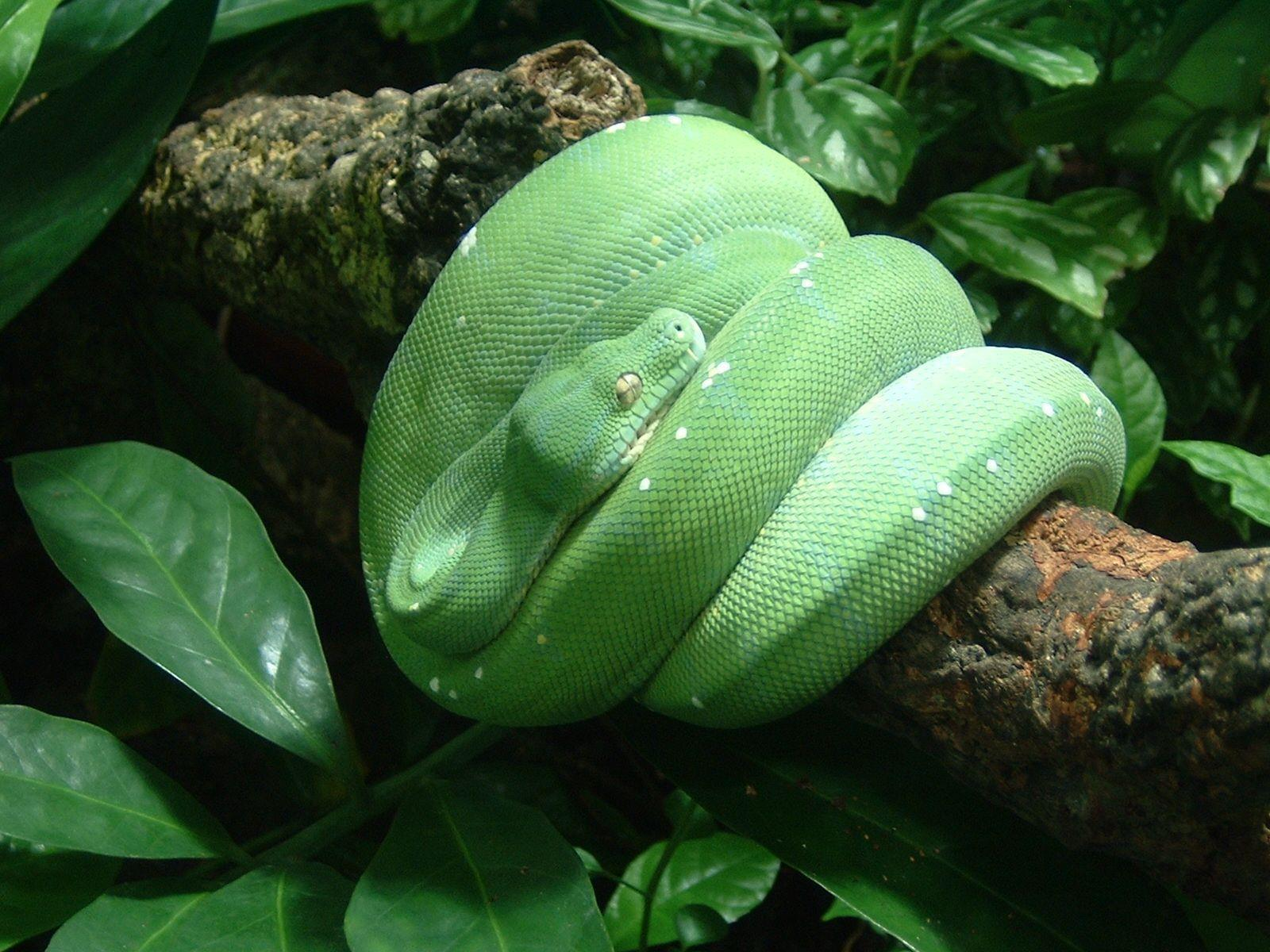 Durch das Gift der Schlange werde die Blutgerinnung gestört