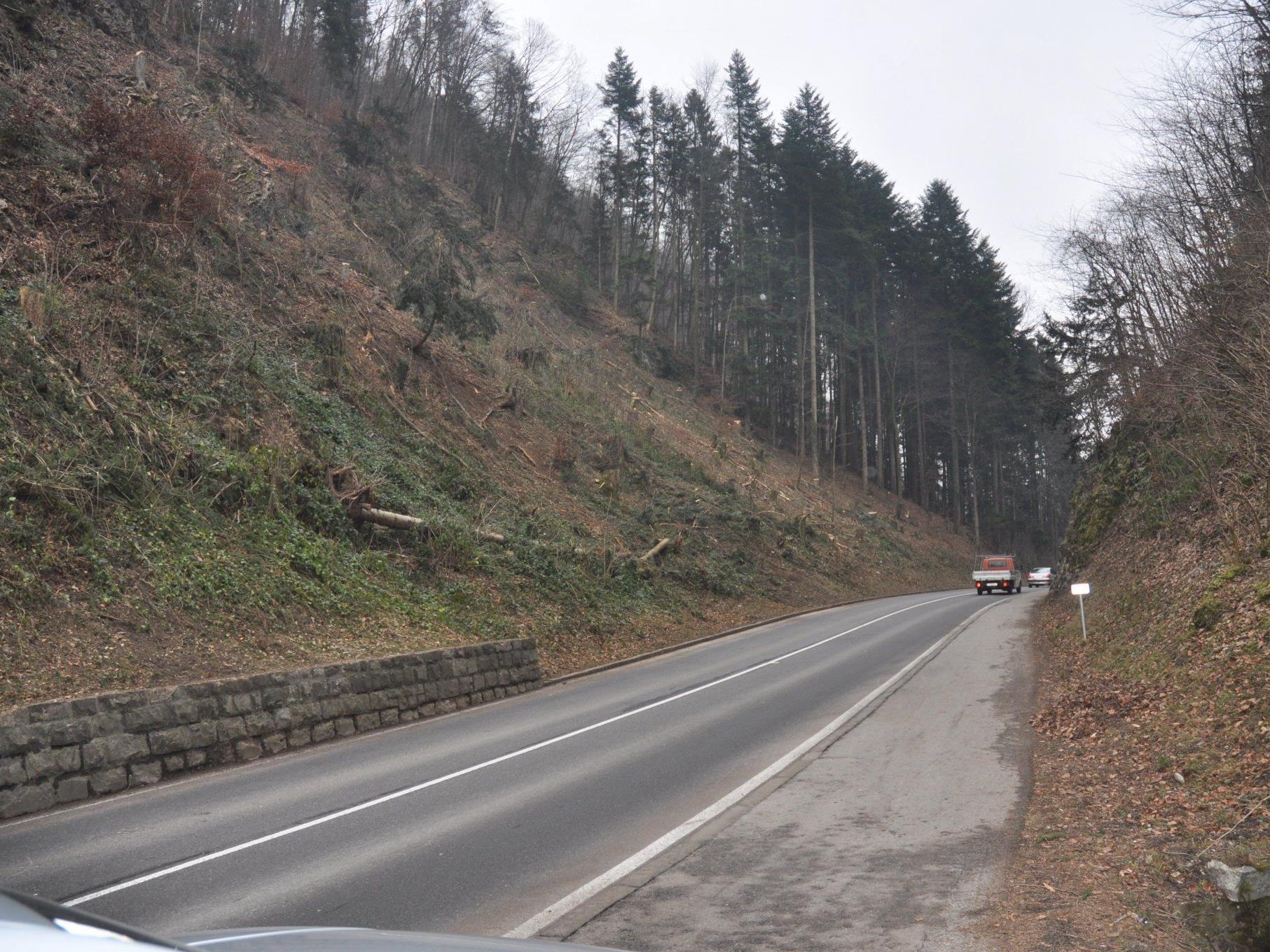 Die Rodungen im Klauser Wald sind abgeschlossen