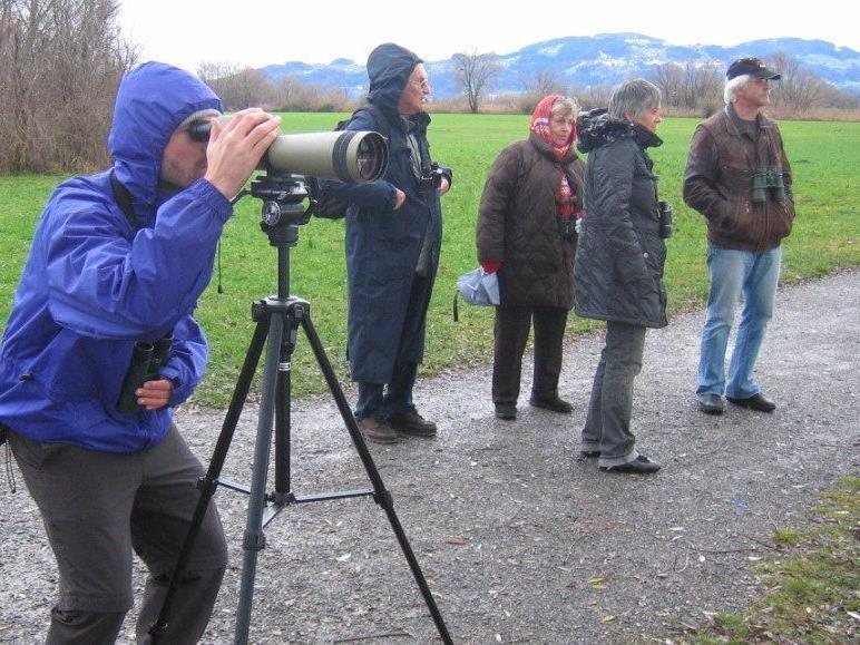 Vogelbeobachtung im Freiland