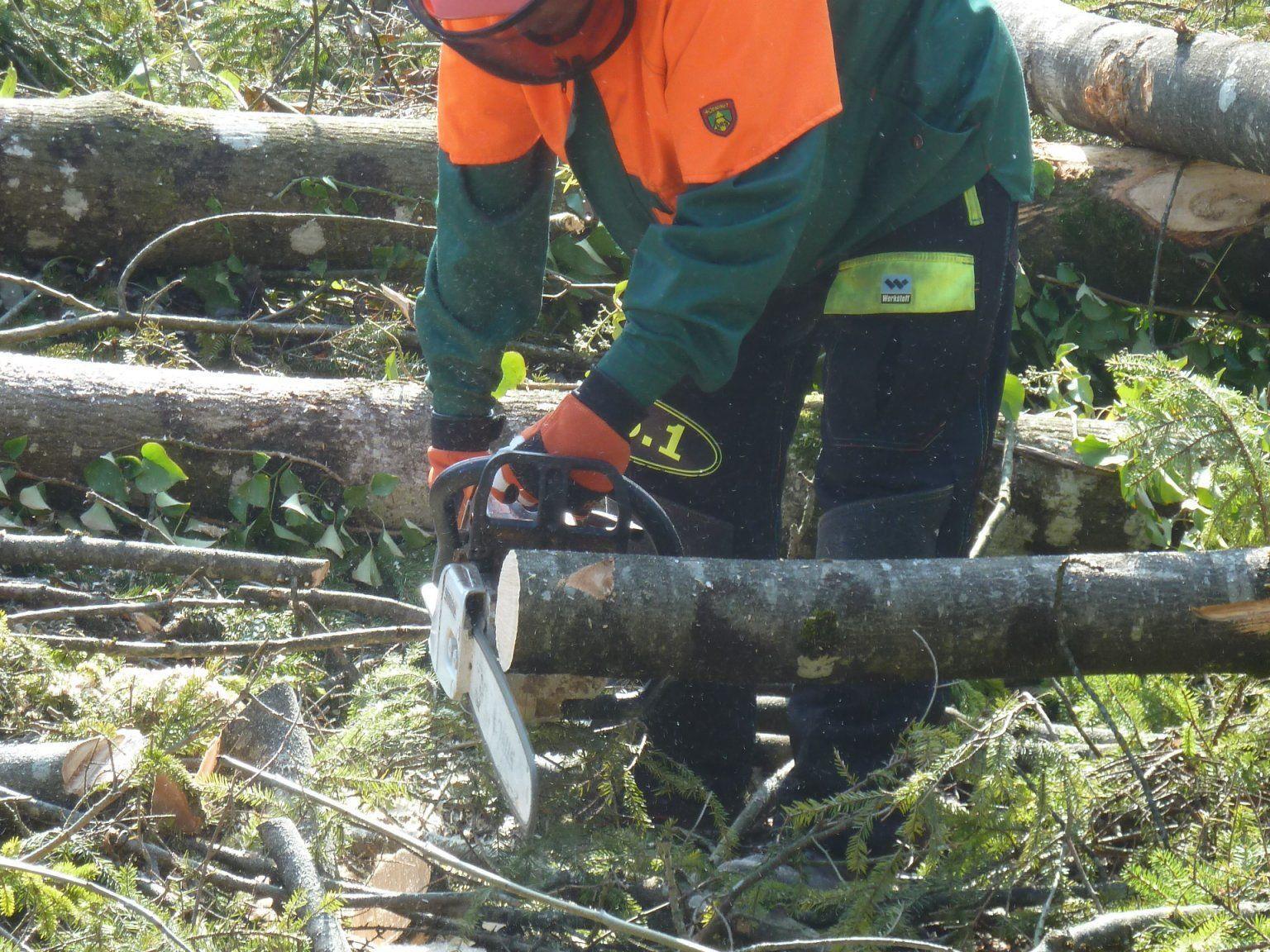 Viele weitere Holzkurse werden beim LFI angeboten.