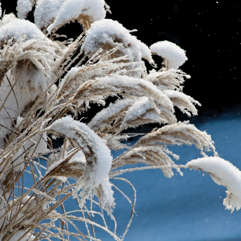 Wie können Frostschäden vermieden werden?