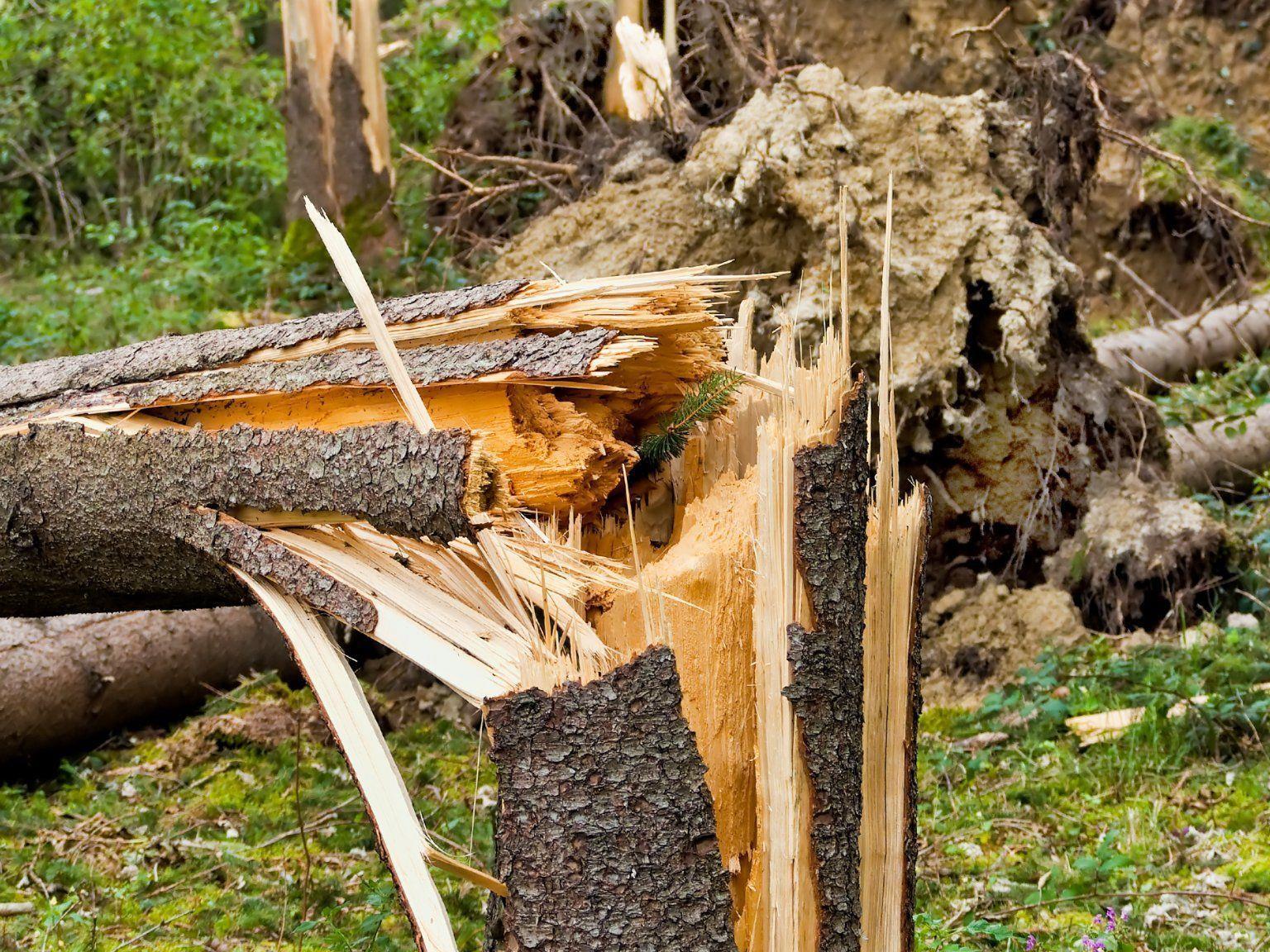 Ein umstürzender Baum verletzte eine Waldarbeiter schwer